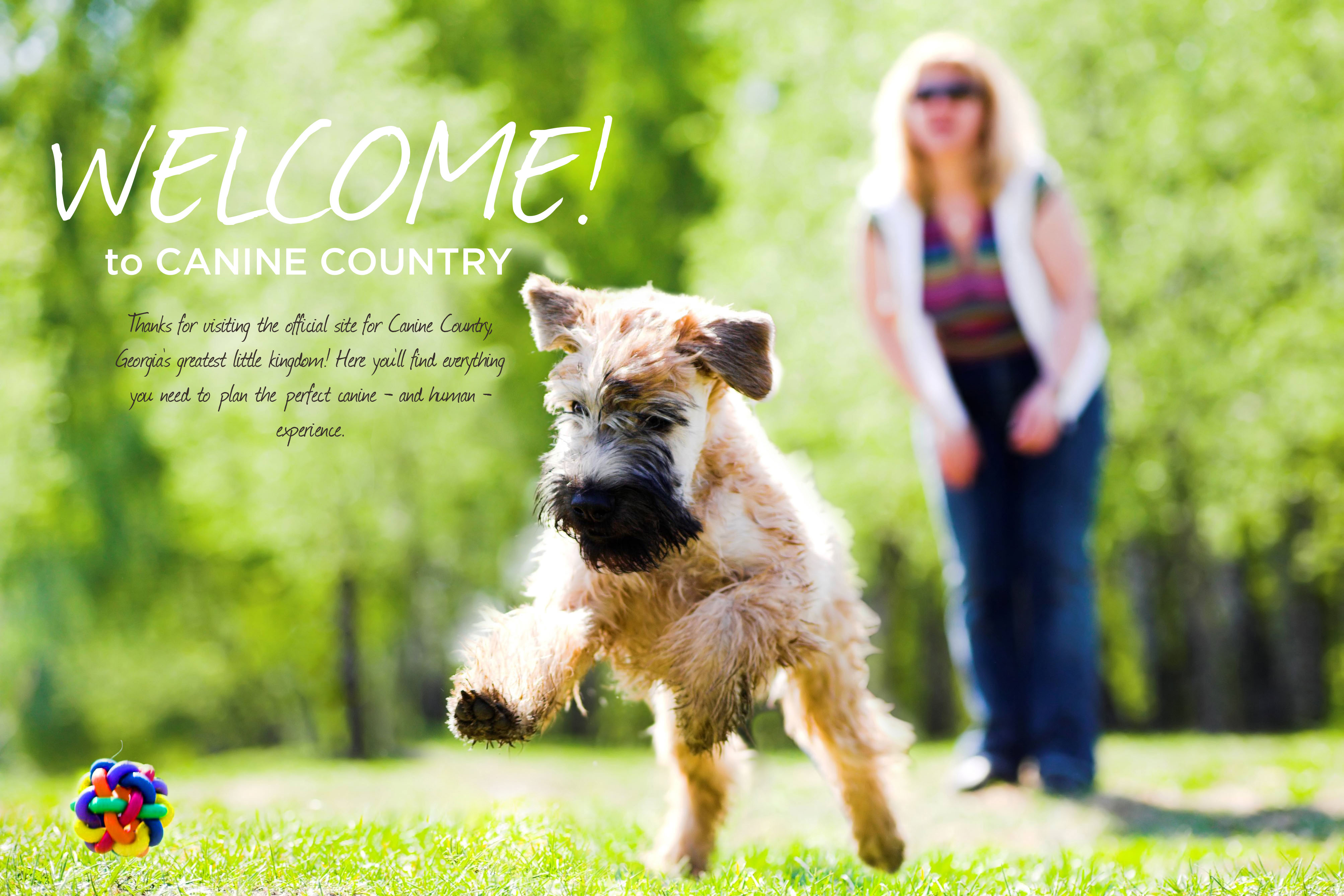 Canine Country Academy | Dog Training and Behavior