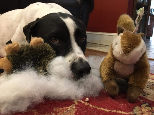 Is your dog tough on toys?